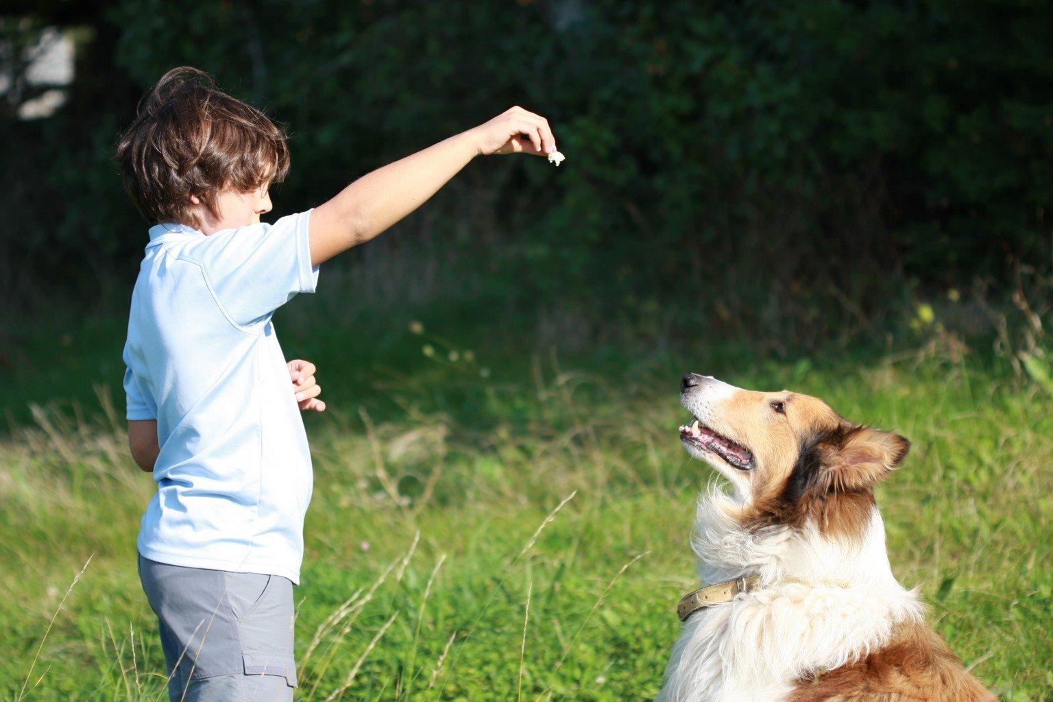 dresser son chien obeissance